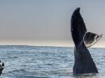 B1-whale-tale