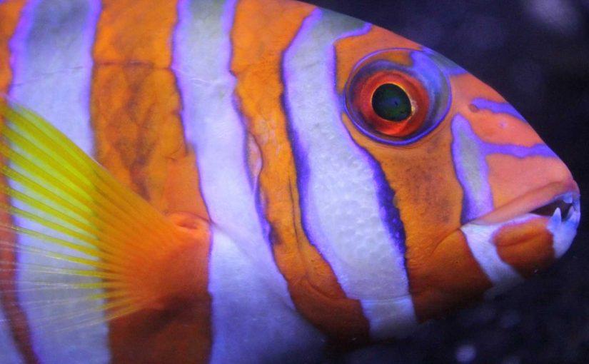 Guide to filming underwater macro video