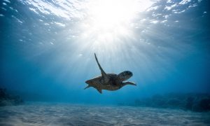 Guide to using ambient light in underwater photos