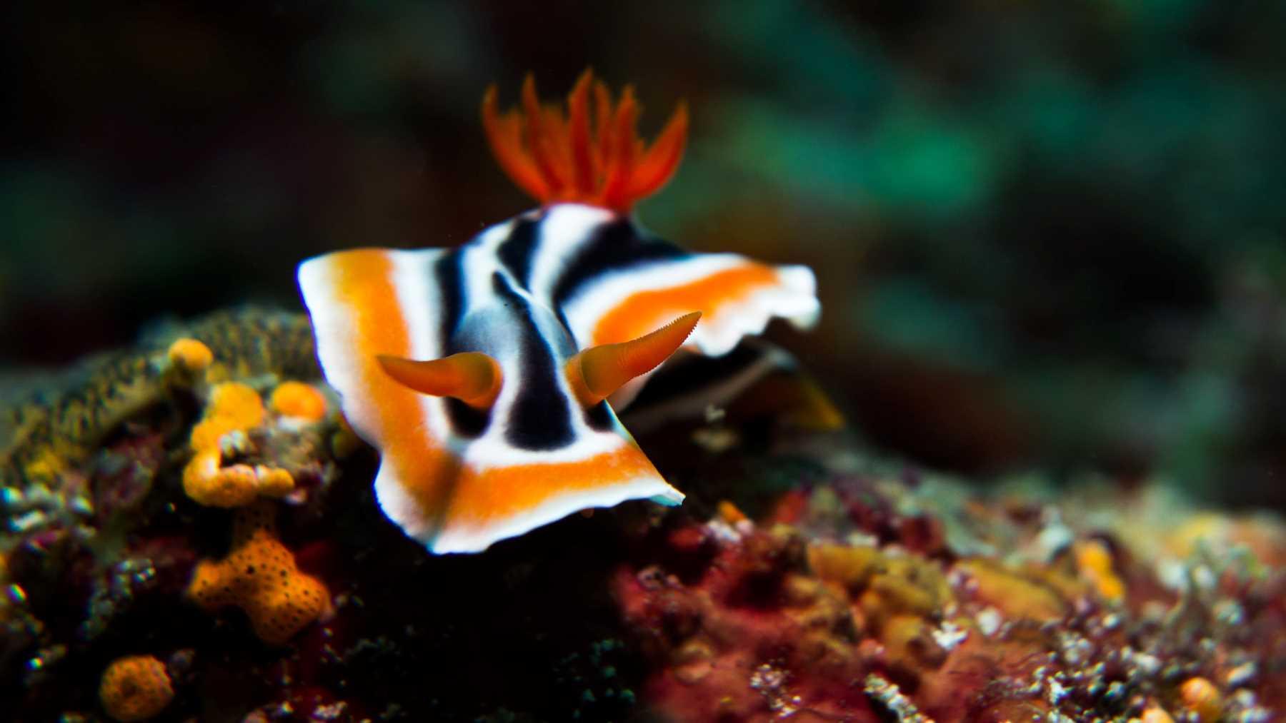 The 10 best sea creatures to film underwater