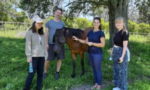 Journalism adventures: Therapy with horses at Eden Empathy