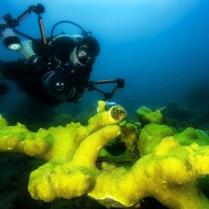 finding the right underwater video arms 5