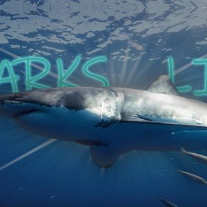 Sharkslive Internship